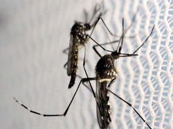 Dengue e Covid